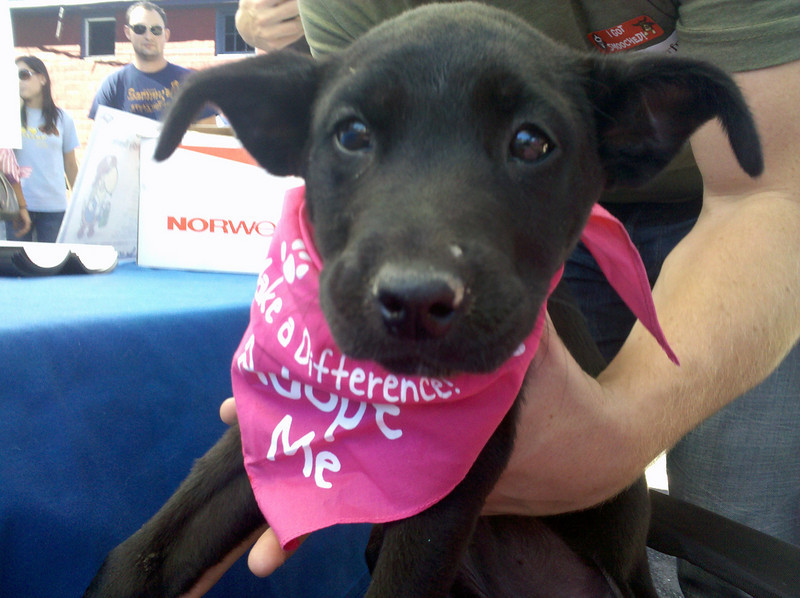 This black lab mix was saved by Dog Days of Charlotte and is currenlty looking for a forever home